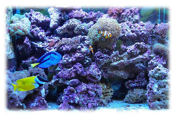 Take your Aquarium experience to a New Level with Reefs and Corals from Premier Aquatics