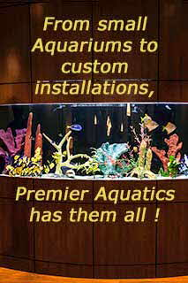 From Small DIY Tanks to Commercial Displays, Premier Aquatics can do It All !